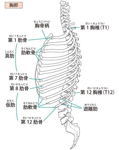肋骨 ヒビ 症状
